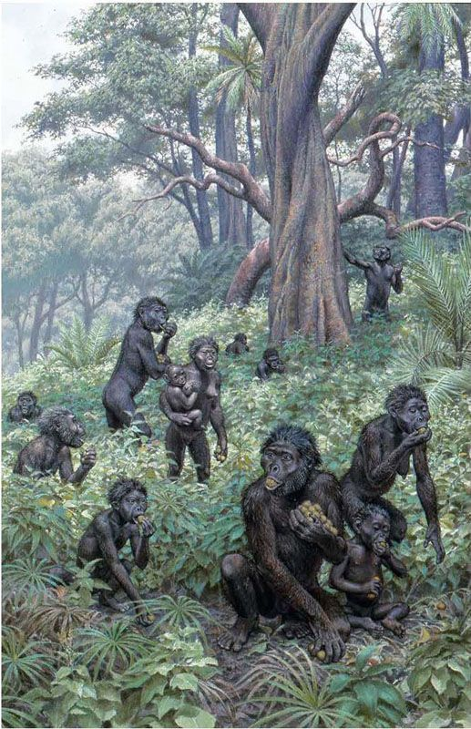 what is an example of a non-human primate having culture